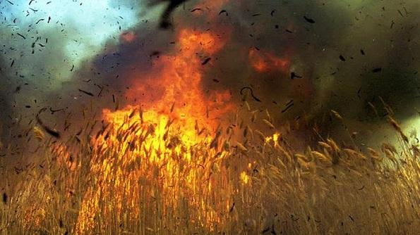 100 га пшеницы сгорело в Петровском районе Ставрополья
