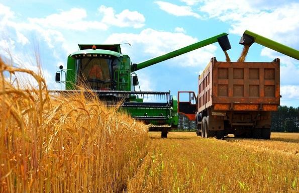 В Ставропольском крае во всех категориях хозяйств убрано 18% уборочной площади