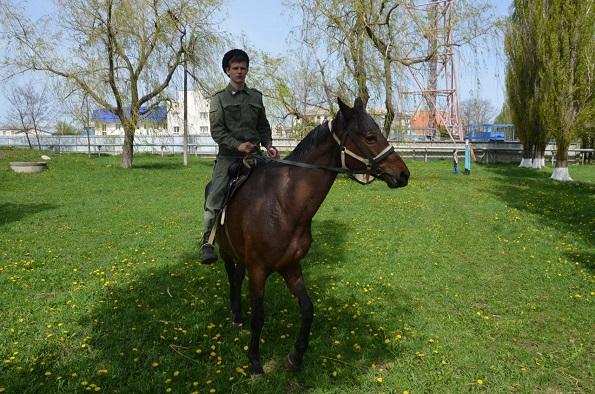 В Михайловске создадут конно-спортивный клуб