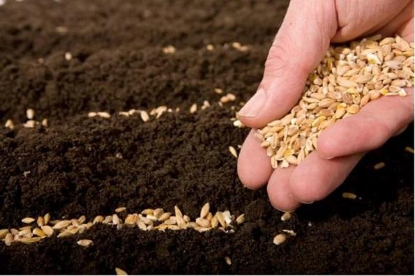 Научно-производственный кластер по производству семян будет создан на Ставрополье в рамках госпрограммы развития СКФО