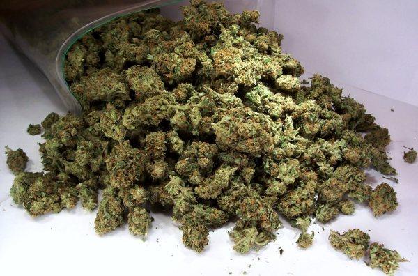 В крае изъято более одного килограмма марихуаны