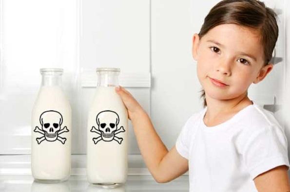 В Ставропольской молочной продукции найден свинец