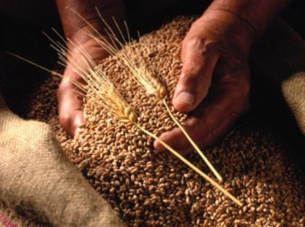Качественные семяна - залог увеличения будущего урожая на 30% без дополнительных затрат