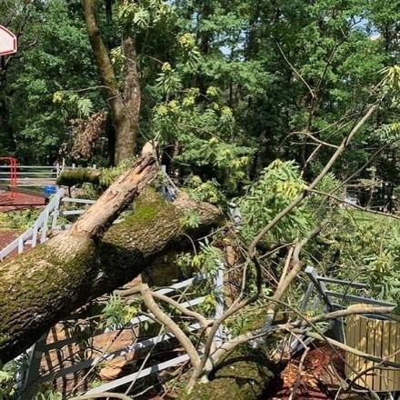 Упавшие деревья после стихии