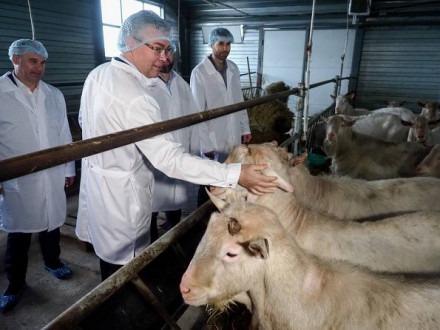 Губернатор посетил «Козий молочный комплекс «Надеждинский»